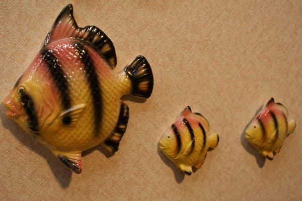 画像1: ウォールディスプレイ 3pcセット(Fish)#009